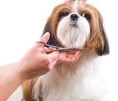 kutyakozmetika képzés